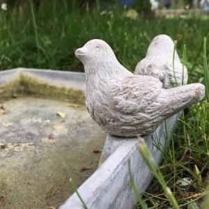 Vi har ett fågelbad i trädgården.