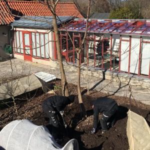 Alla borde plantera ett träd. Eller... åtminstone se på medan andra jobbar...